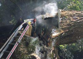 Hohler Baum brannte